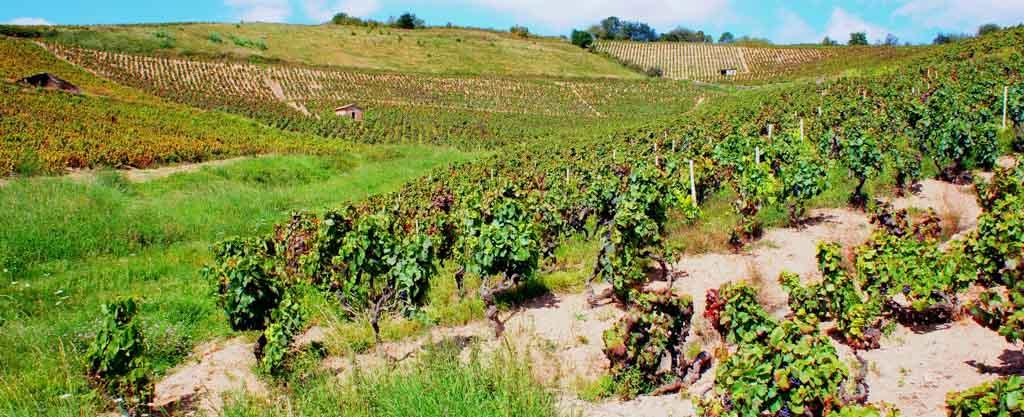 Beaujolais-vin-deux-mondes